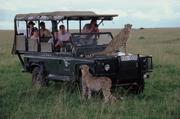 cheetahcar